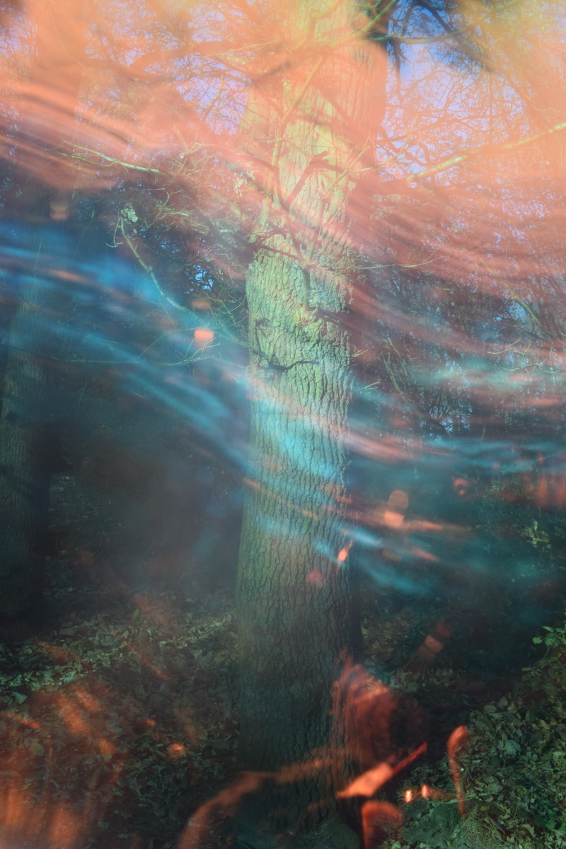 Untitled is a photograph by artist Priti Patel. It shows a tree trunk with coloured light moving in front of it. The colours are greens, turquoises and golden orange. It is a magical forest.
