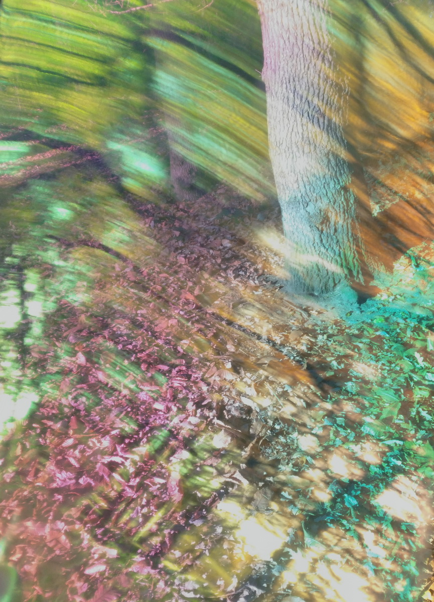 Untitled is a colourful photograph by artist Priti Patel. It shows the base of a tree trunk with moving coloured light and lines. The colours are greens, yellows, purples, turquoise.